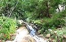מיקי'ס -  גן העדן  של גלוריה הוואדי אצלנו בחצר...