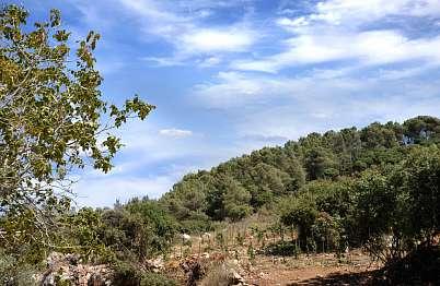 צימר in north area | Apirion - נוף הרי הגליל הנשקף ממרפסות הסוויטות